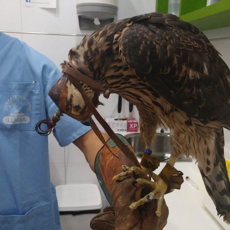 Animales exóticos: Servicios de Clínica Veterinaria Llíria