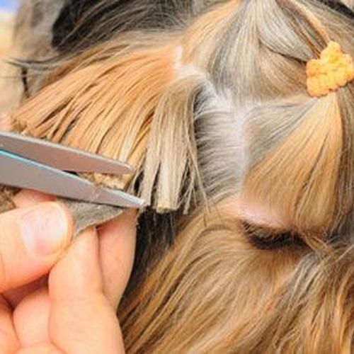 SErvicio de peluquería canina