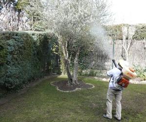 Fumigación de cucarachas en la Comunidad de Madrid