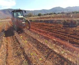Viveros agrícolas y forestales en Aielo de Malferit | Viveros Vila