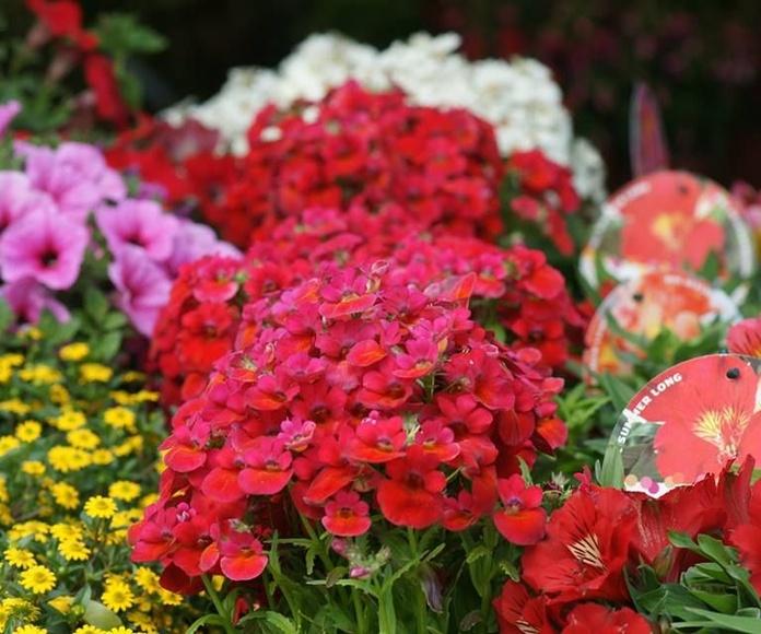 Variedad de plantas de exterior