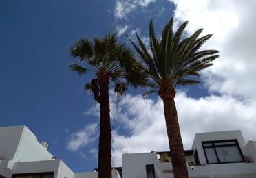 Poda de palmeras y árboles