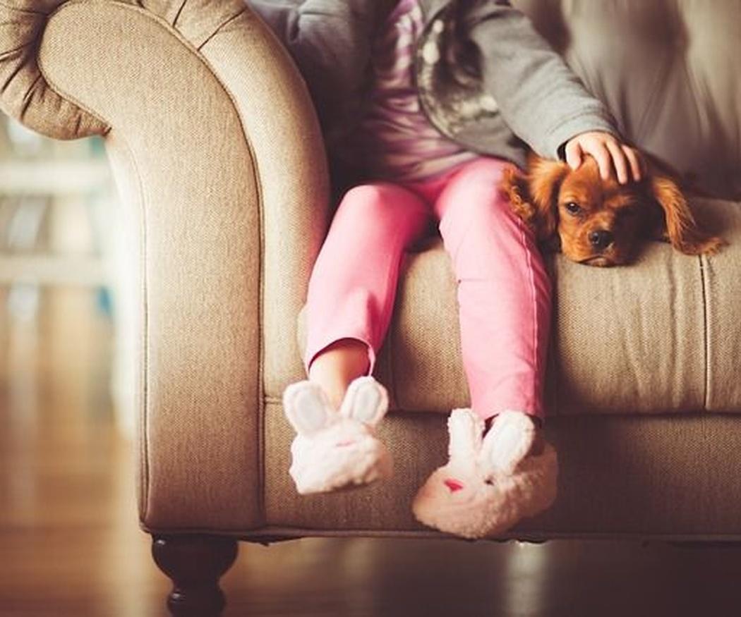 El primer día de tu cachorro en casa: pautas para facilitar su adaptación