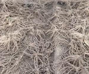 En viveros  hortplant se trata las plantas con mimo a la hora del arranque para llegar a sus clientes perfectas    Sin raíces rotas y plantas enteras.