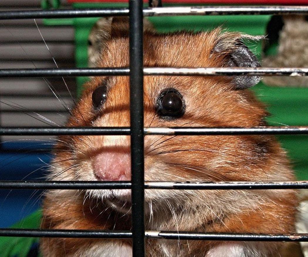 Accesorios imprescindibles para roedores