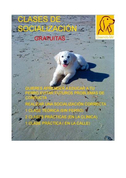 Apúntate a las clases gratuitas de socialización!!! Es muy importante educarlos!