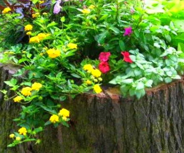Tocon ya integrado dentro del césped artificial convertido en jardinera.