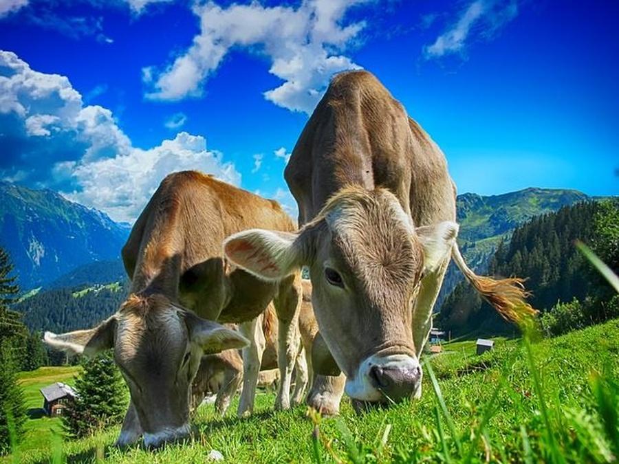 Vacas felices, leche saludable