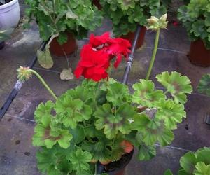 Macetas y herramientas de jardinería en Palma de Mallorca