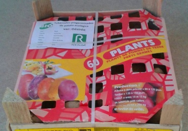 Plantas en talo y siembra