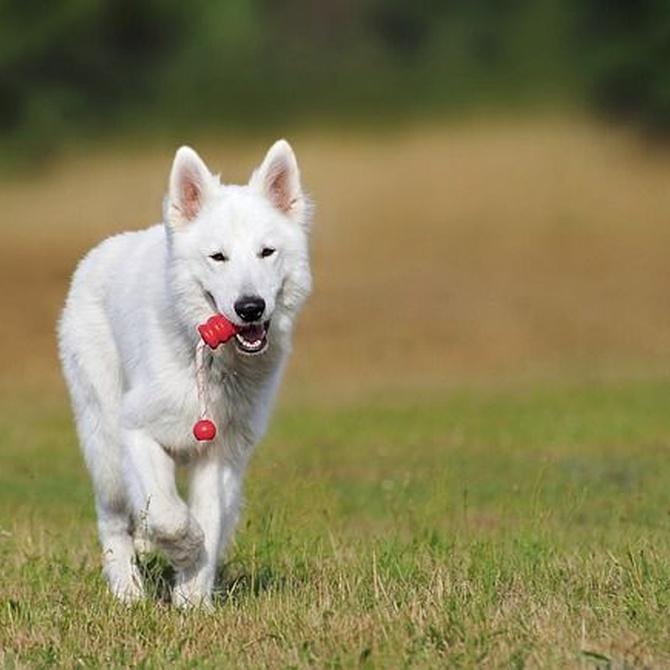 Las golosinas como premio para el perro