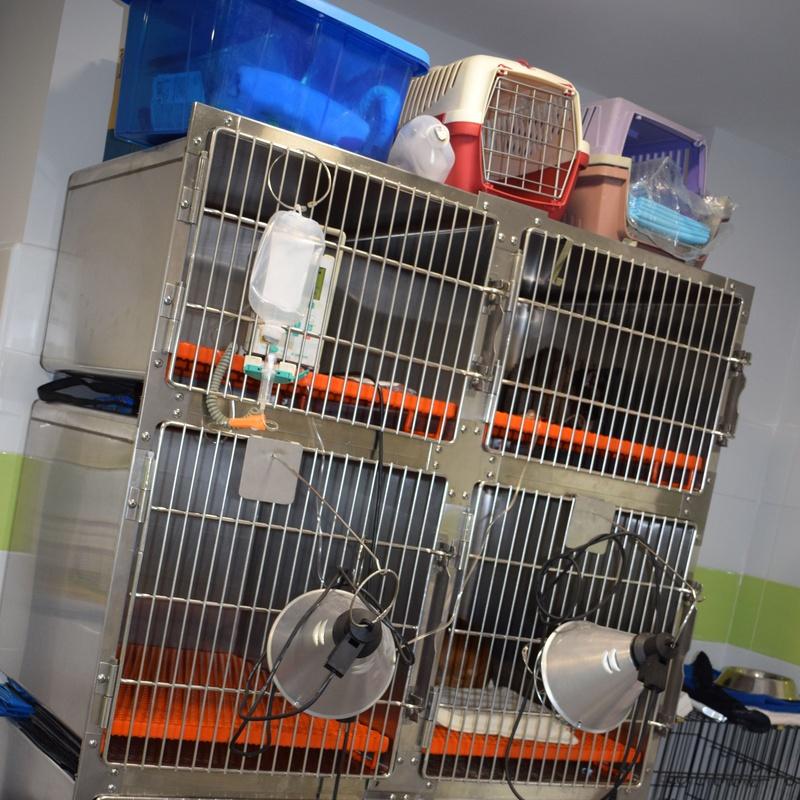 Hospitalización veterinaria: Servicios veterinarios de Clínica Veterinaria Parque de los Estados