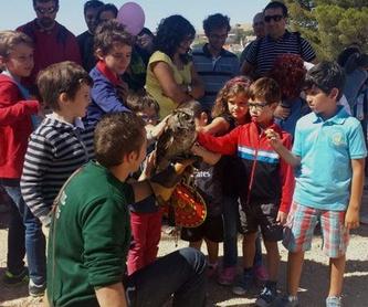 Cría de rapaces: Servicios de Juan Falcon