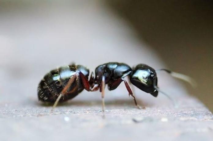 Hormigas  : Servicios  de Ecoserra