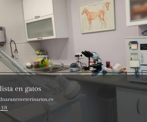 Clínica veterinaria en Oviedo | Centro Veterinario Ciudad Naranco