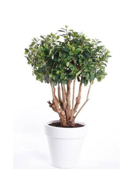 Árbol  ficus Botanic: ¿Qué hacemos? de Ches Pa, S.L.