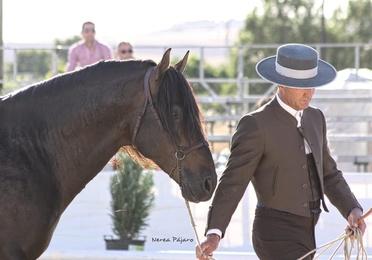 Compra y venta de caballos