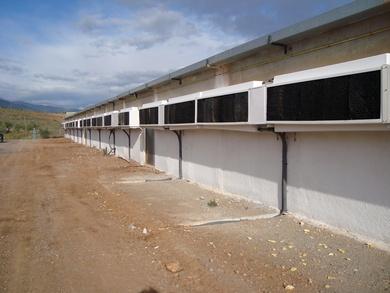 Importancia del control de la velocidad del aire a nivel de animal en explotaciones avícolas