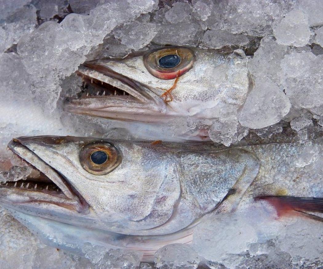 Saludables propiedades del pescado blanco