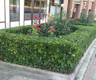 Xerojardineria: ¡Jardinería y mucho más! de SalvaJardin