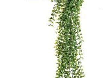 Planta colgante exterior 421434