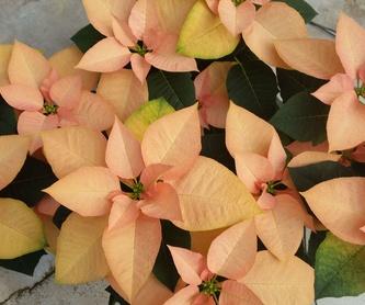 Galería de Vivero de plantas ornamentales en  | Viveros Algeplant