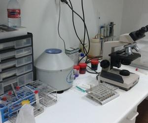 Todos los productos y servicios de Veterinarios: Clínica Veterinaria Jameos