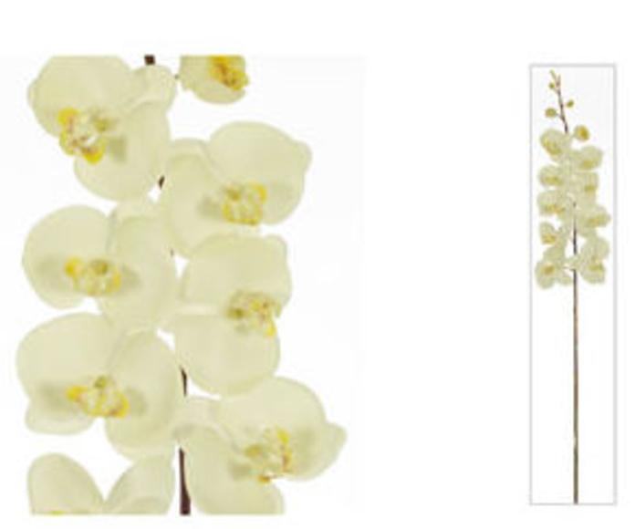 Orquídea X10 Látex