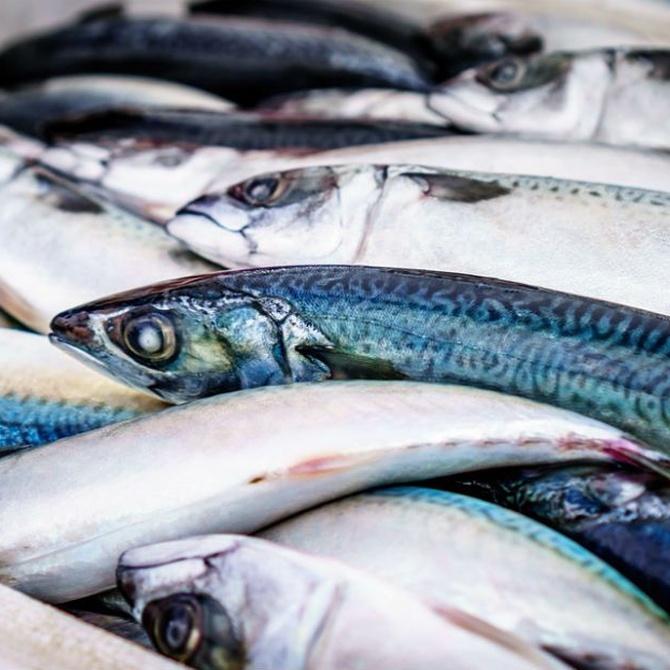 La importancia del pescado en la cocina vasca