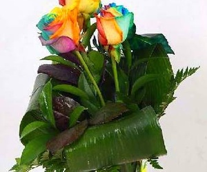 Rosas arcoiris naturales