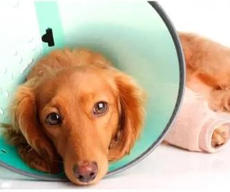Peluquería canina y felina: Servicios of Veterinario Alcorcón