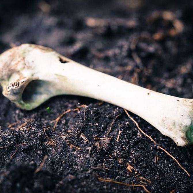 Los huesos son peligrosos para tu perro