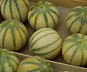 Calibrado y envasado del melón francés