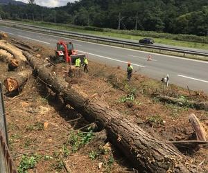 Tala de árboles y triturado de restos  en márgenes de autovías y autopistas