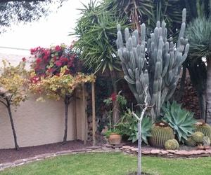 Mantenimiento jardín particular Campello