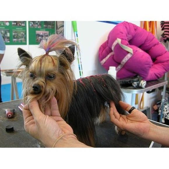 Peluquería canina y felina: Servicios de Centro Veterinario Sejmeth