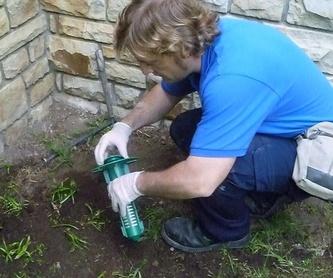 Tratamientos contra las termitas: Servicios de Abando Desinfecciones