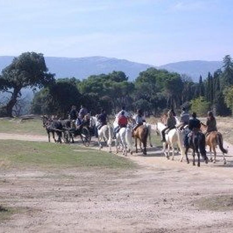 Excursiones: Servicios de Equitación Peluca
