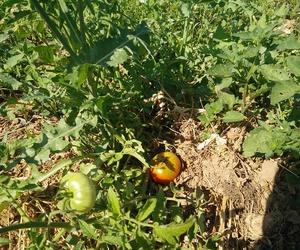Compra verdura ecológica de temporada y de todo el año en Las Tablas