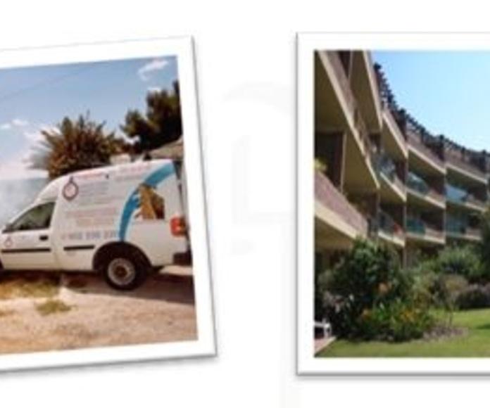 Tratamiento de Jardines fitosanitarios: procesionaria del pino, picudo rojo: Nuestros Servicios de Higienisa