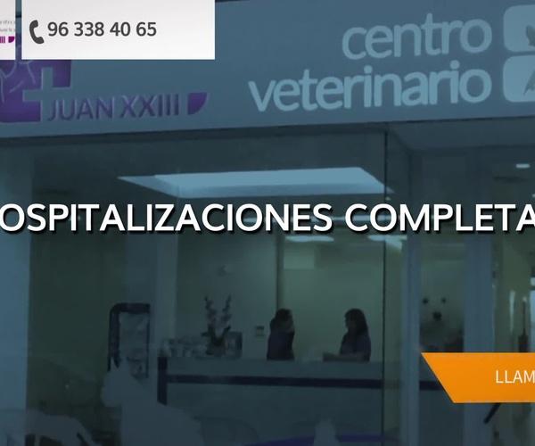 Veterinario 24h en Valencia | Centro Veterinario Juan XXIII