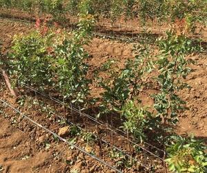 Vivero de plantas en Pinarejo