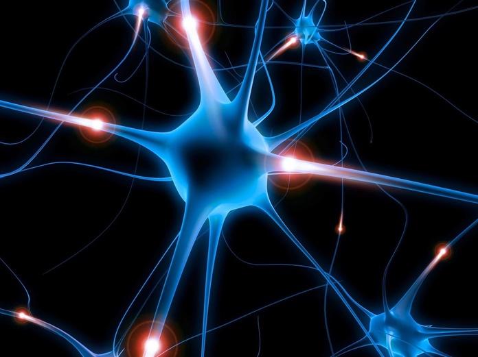 Neuropsicología: Especialidades de Psicóloga Rosario Ortuño