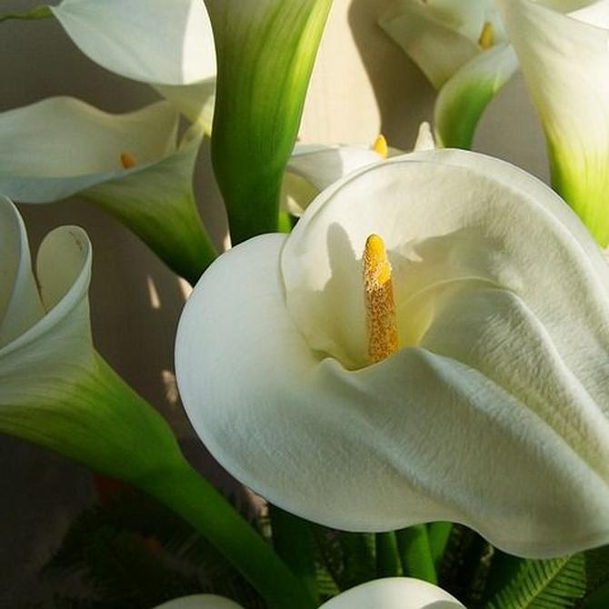 Flores para ramos de novia en primavera