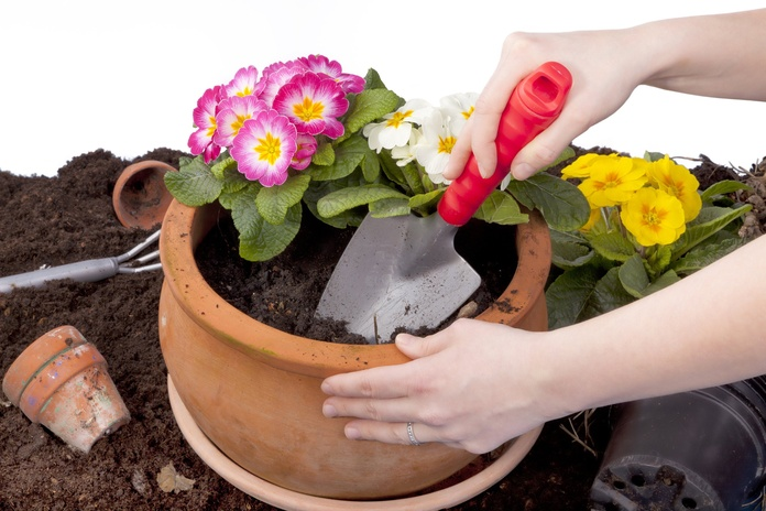 Reposición de plantas: Servicios de Darobe Integral de Mantenimientos, S.L.