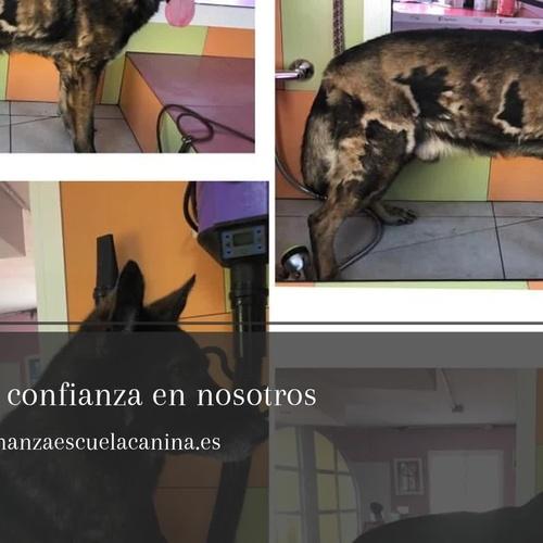 Cursos de peluquería canina en Las Palmas de Gran Canina