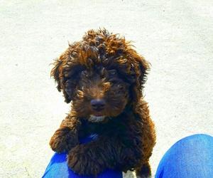 Can Exprés servicio veterinario a domicilio  Zaragoza : cachorro sano