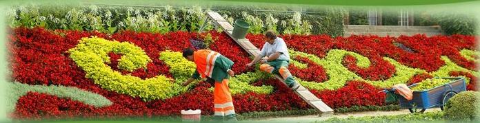 Expertos en jardinería