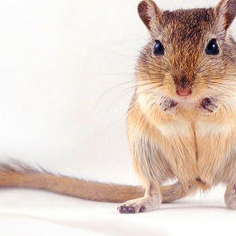 Pequeños roedores: Catálogo de Reptil Parc