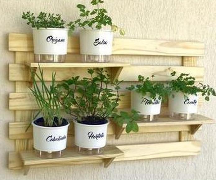 Cultivar plantas aromáticas con niños